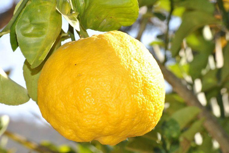 Du citron dans la sauce Amour d'ail